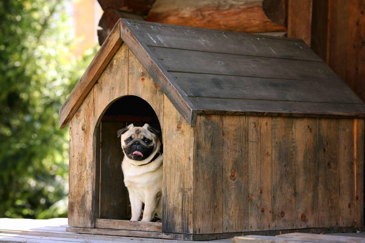 construire une niche pour son chien