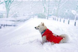 Des vêtements d'hiver pour chien