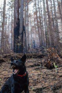 Gérer chien agressif